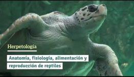 CONVERTIRTE EN AUXILIAR VETERINARIO DE ANIMALES EXÓTICOS: ASIGNATURAS Y LAS SALIDAS LABORALES