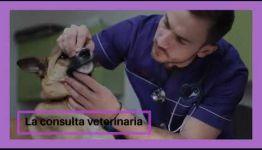 VÍDEO SOBRE EL TEMARIO Y LAS SALIDAS PROFESIONALES AL CONVERTIRTE EN AUXILIAR VETERINARIO DE ANIMALES DE COMPAÑÍA