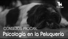 OPINIONES DE EXPERTOS SOBRE APRENDER A DISTANCIA PSICOLOGÍA CANINA Y FELINA