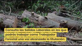 CONVERTIRTE EN TRABAJADOR FORESTAL: ASIGNATURAS Y LAS SALIDAS LABORALES