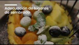 APRENDER Y CONVERTIRTE EN FRUTICULTOR: ASIGNATURAS Y LAS SALIDAS LABORALES