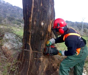 Ciclo Formativo Grado Medio Trabajos Forestales Y De